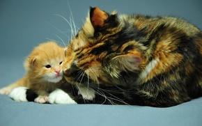 Картинка кошка, фон, обои, рабочий стол, малыш, котёнок, мама
