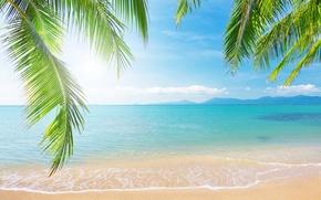 Картинка море, небо, облака, пейзаж, ветки, природа, тропический пляж, пальмы, берег, sky, sea, landscape, nature, clouds, …