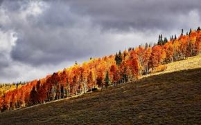 Картинка autumn, hill, orange, autumn colors, sunlight, countryside, shadow, fall, cloudy, fall colors