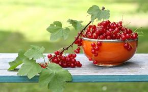 Картинка ветка, садова, чашка, смородина, красная, листья