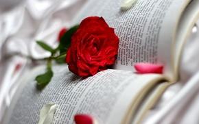 Обои роза, красная, капли, лепестки, книга