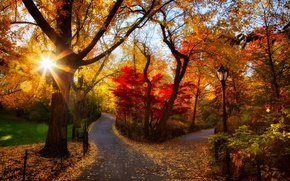 Картинка парк, дорога, leaves, fall, листья, path, sunset, colors, trees, walk, осень, лес, park, forest, природа, ...