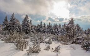 Картинка Зима, Снег, Мороз
