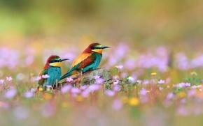 Картинка цветы, птицы, ветка, щурки золотистые, пчелоедки