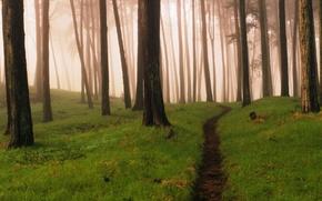 Картинка лес, туман, тропинка