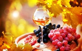Обои Вино, Еда, фото, Виноград, Листья, Бокалы
