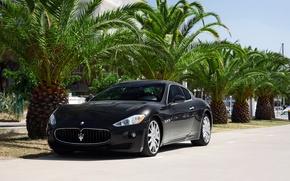 Картинка Maserati, GranTurismo, Black, Palms