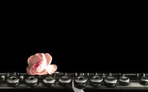 Картинка цветок, музыка, флейта