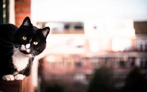 Картинка кот, черно-белый, смотрит