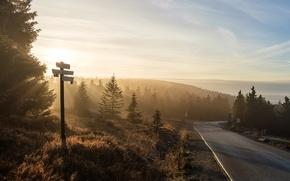Картинка дорога, пейзаж, природа, туман, утро