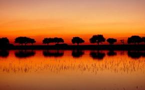 Картинка деревья, пейзаж, закат, природа, река