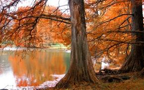 Обои Дерево, озеро, осень