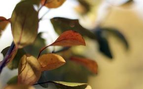 Картинка осень, листья, желтые, красные