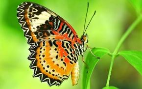 Картинка узор, бабочка, растение, крылья