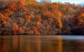 Картинка осень, лес, небо, деревья, озеро, склон