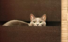 Обои Кошка, комод, серый, кот