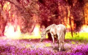 Обои ретушь, бабочки, лошадь, природа, цветы