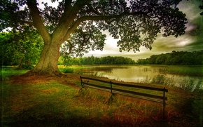 Картинка природа, деревья, листья, дерево, скамейки, озеро, пейзаж, осень, лес