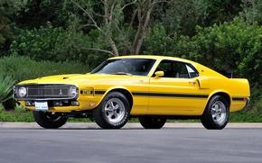 Картинка Shelby, GT500, 1969