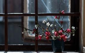 Обои цветы, окно, фон