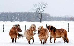 Картинка зима, животные, снег, снежинки, природа, кони, ограда, лошади
