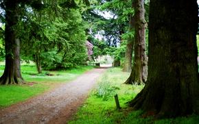 Картинка дороги, Деревья, травы