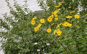 Картинка цветок, трава, цветы, стена, widescreen, обои, wallpaper, монастырь, широкоформатные, background, обои на рабочий стол, полноэкранные, …