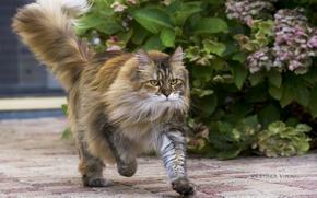 Картинка кошка, кот, растение, куст, бег, киса, коте