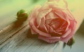 Обои бутон, макро, дерево, лепестки, цветок, роза