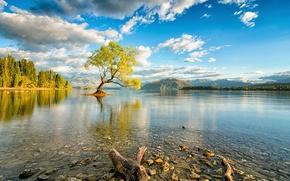 Картинка небо, облака, озеро, дерево, Новая Зеландия, остров Южный, Уанака
