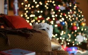 Обои огни, дом, диван, настроение, елка, собака, подушки, пледы