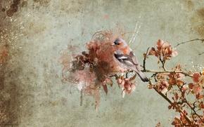 Картинка фон, птица, ветка