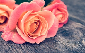 Картинка макро, цветы, дерево, розы, доска