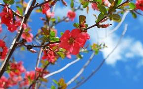 Картинка весна, цветение, blossom, Spring, Flowering trees