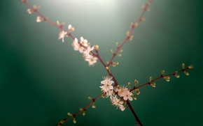 Картинка ветки, стебли, бутоны, белые цветы, branches, buds, stalks, white flowers