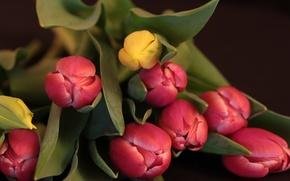 Картинка листья, природа, букет, лепестки, бутон, тюльпаны