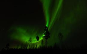 Картинка лес, деревья, ночь, северное сияние