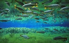 Картинка вода, рыба, косяк, бриконы