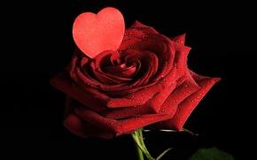 Обои valentine's day, цветы, лепестки, любовь, розы