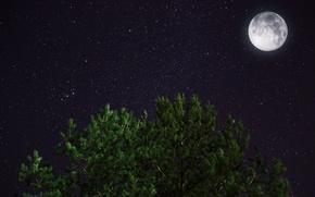 Обои луна, ночь, звезды, сосна, космос