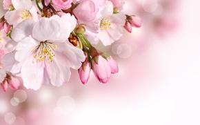 Обои цветы, лепестки, весна