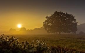 Картинка поле, лето, туман, дерево, рассвет, утро