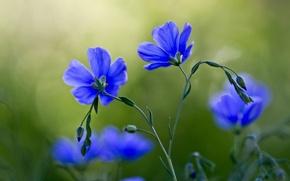 Картинка цветы, стебли, лепестки, бутоны, боке