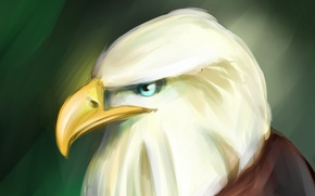 Обои орел, арт, art, eagle