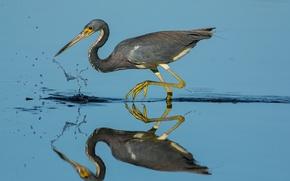 Обои клюв, вода, отражение, птица