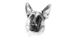 Картинка пёс, взгляд, глаза, друг