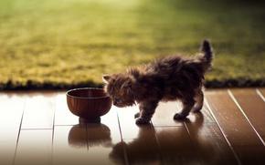 Обои кошка, котенок, ковер, паркет, миска, Daisy, Ben Torode