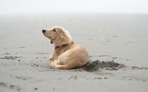 Обои песок, друг, собака