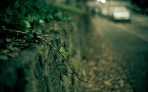 Картинка машина, листья, макро, зеленый, фон, обои, растение, размытие, ветка, листик, wallpaper, автомобиль, широкоформатные, background, macro, …