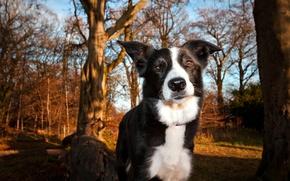 Картинка парк, друг, собака
